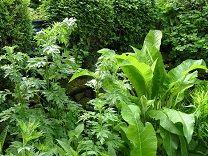 garten grün im juni