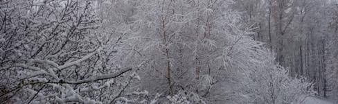 nebel schnee bäume