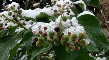 efeu winter
