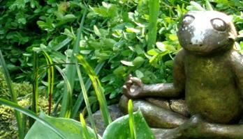 frosch meditation