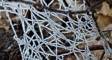 spinnfäden eis