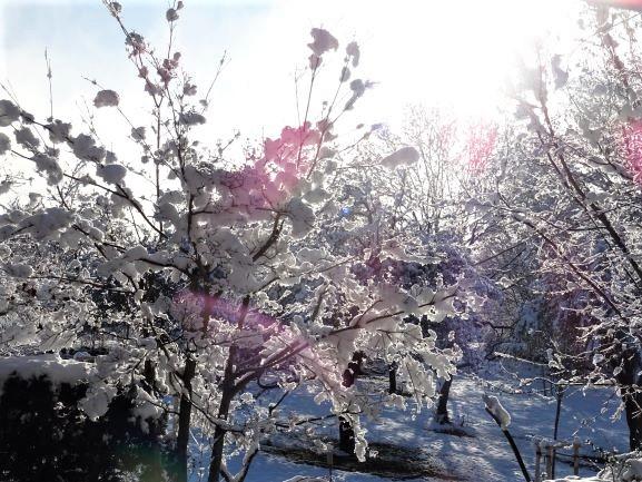 winter traum garten